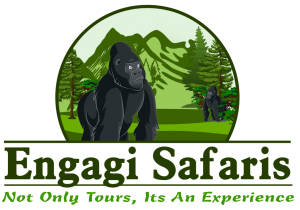Africa Gorilla Safaris - Engagi Safaris
