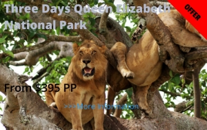 Three Days Queen Safari