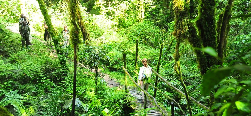 Nature walk in Bwindi