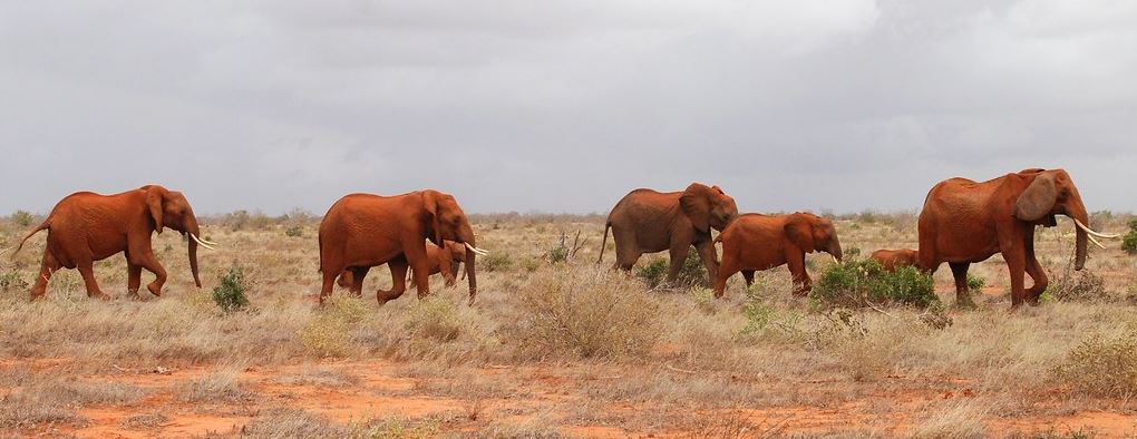 Tsavo East Elephants