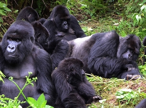 Rwanda-reopens-for-tourism