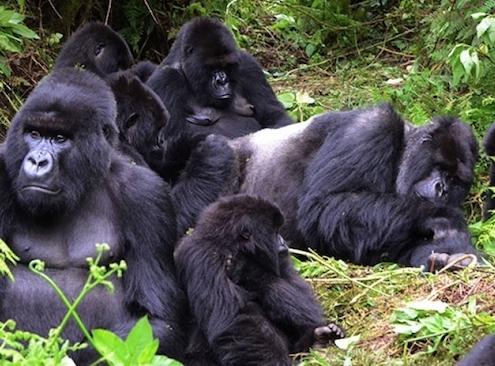 Rwanda-reopens-for-tourism