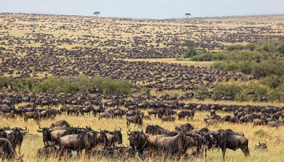 migration-serengeti